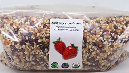 Popcorn Seeds, Kernels, USDA Certified Organic, Non-GMO, Multi-Colored, (Calico or Rainbow), 5 lbs (Five Pounds), (for eating not planting), ~ BULK