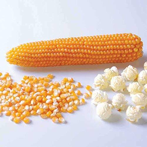 Nature Cart Popcorn Kernels Seed (250 Grams)